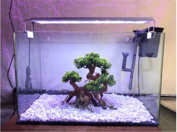 Bể cá cảnh mini trong nhà