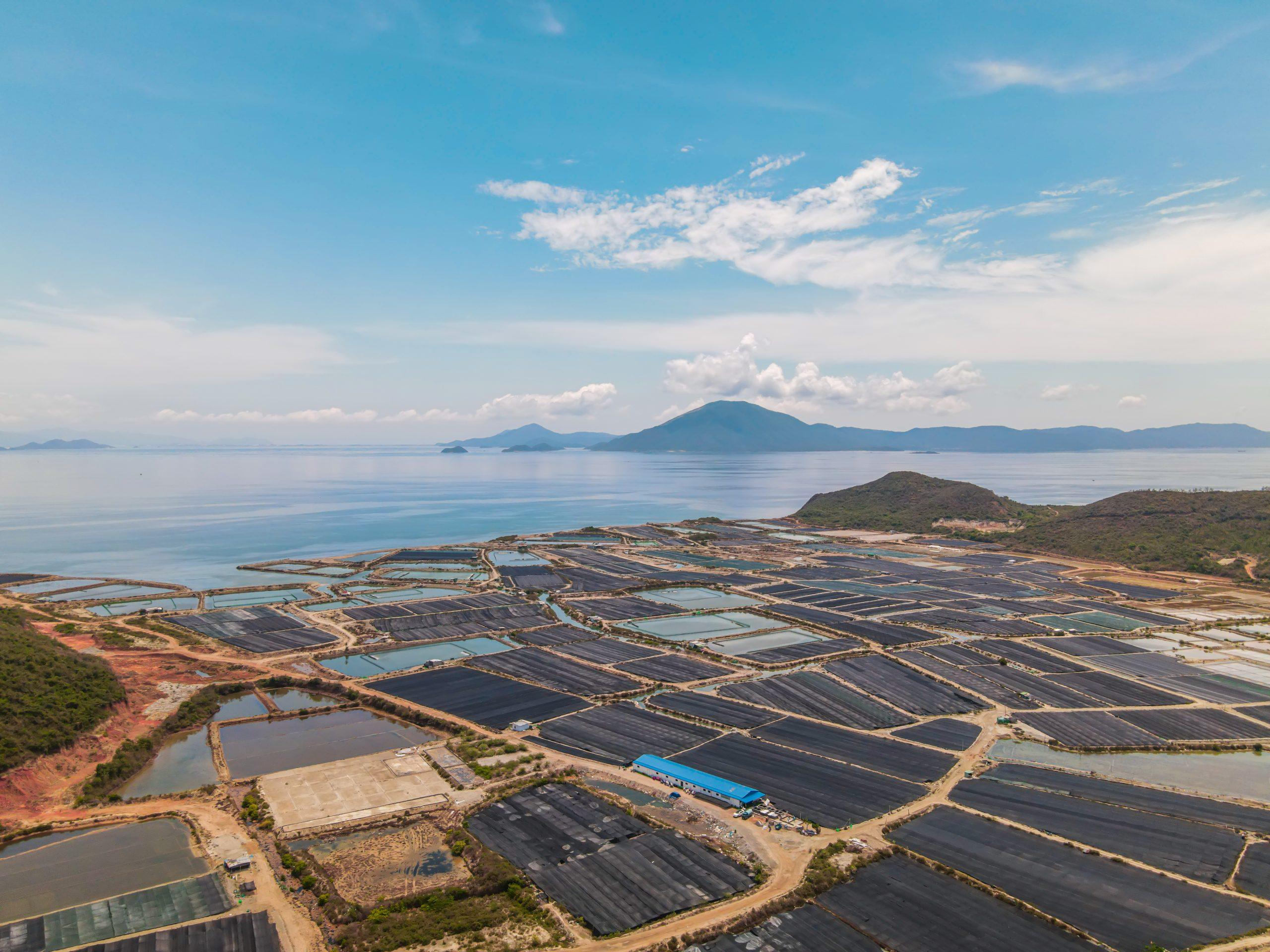 Nơi nuôi trồng rong nho Yukibudo rộng 200 ha
